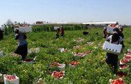الإنتاج الزراعي أولاً