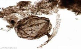 اكتشاف أحفورة من مليار سنة قد تفسر ظهور الحياة على الأرض