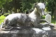 رجل دفن كلبه في مقبرة القرية تعرف على القصة